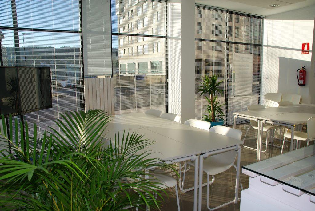 Büro mit Pflanzen, Palme, Hygiene, Office Management