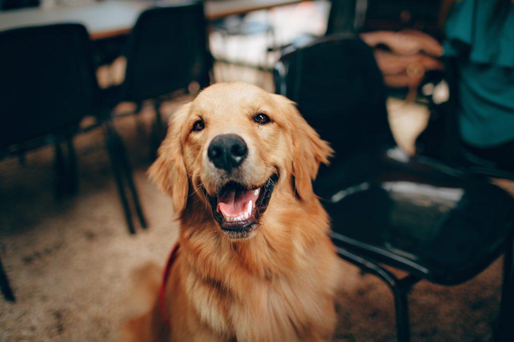 Bürohund, Start-Up, Feel-Good-Manager, Hundeerziehung