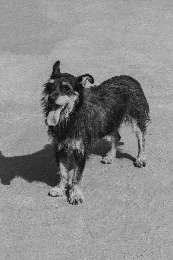 Bürohund, Hund, Office Management, Feel-Good-Manager